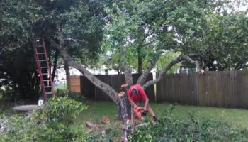 Tree removal, lawn care, property maintenance