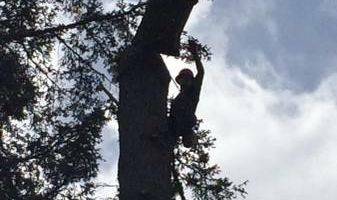 Pacific North West Tree Service, LLC