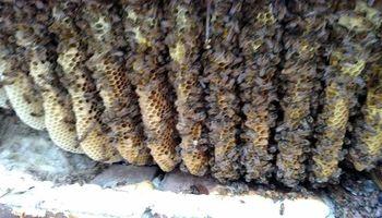 Honeybee Removal Service