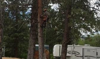 GONZALEZ TREE SERVICE