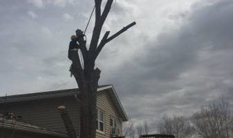 Tree service Munoz - removal/trimming services