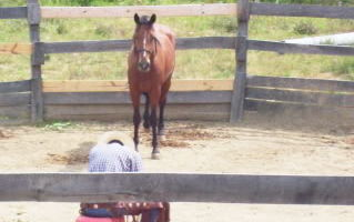 Rudy Horsemanship - mustang training/lessons