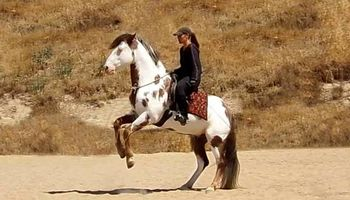 Professional Horse Training & Horsemanship Instruction