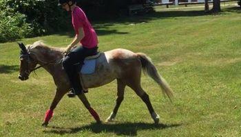 Beginner horse back riding lessons