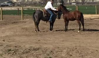 Horse Training, Lessons, Sales