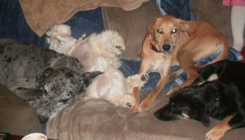 Pet sitting and boarding and training