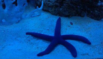Aquarium Service. Aquarium Maintenance