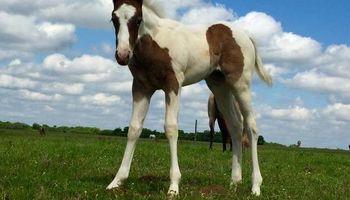 Maner Horse Ranch & Boarding