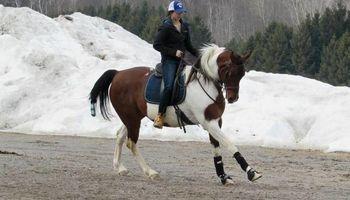 Horse Training/Care