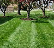 Brush Removal, Lawn Maintenance Available