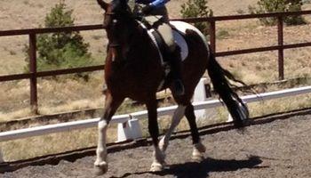 Tonaya Farm/Horseback Riding/Horse Boarding/Training