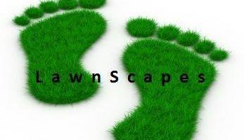 Your Lawn Needs Us