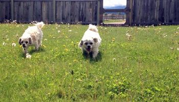 Dog Boarding ~ No Kennels, Stress-free!