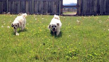 Dog Boarding ~ No Kennels, Stress-free!