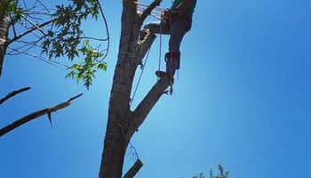 Affordable Jolley's Tree Trimming and Removal
