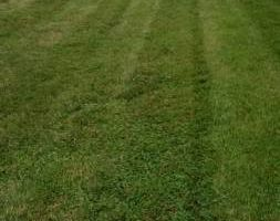 Professional Lawn Care At An Affordable Price