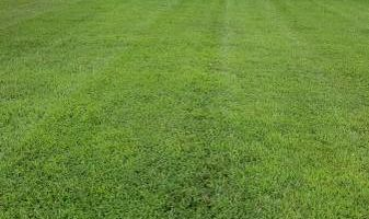 Lawn care service - mowing, edging, blowing