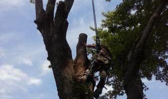 TRACY'S TREE SERVICE