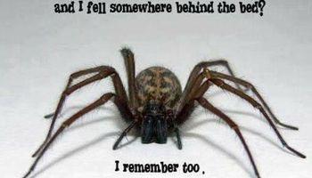 Licensed Exterminator. Ryder's Pest Control