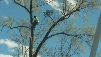 Tree trimming by JJ Tree Service