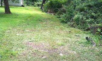 Bush Hog and minor Clearing