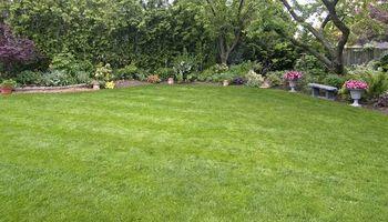 Bastrop county Yard mowing & Lawn service