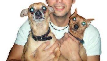 Park Slope DOG WALKER- ASPCA Experienced DOG BOARDING & Cat sitter