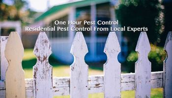 Pest Stops Here Free No Obligation Estimates