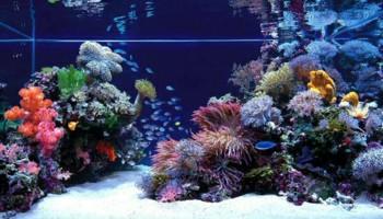 Aquarium Service. Discounts!