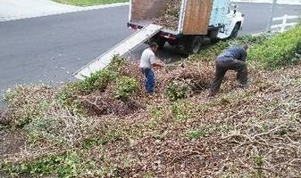 Sanchez tree services and clean ups