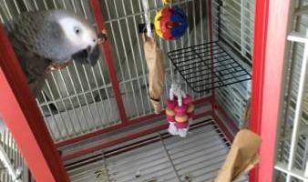 OC PARROT NANNY ~ Pet Sitter for Birds