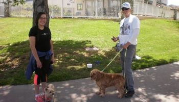 OC K-9 Services. Puppy Training, Human Trainingю 50%Discount!!