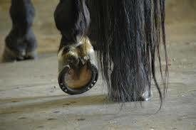 Farrier service - 10 yrs exp