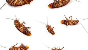 Pest Control $65