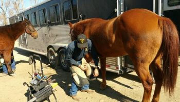 Farrier / Horseshoeing. Trim $30
