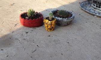 Plants - all kinds!