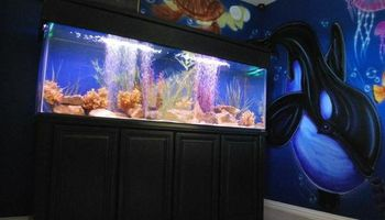 Pete's Angels Aquarium Services, Set-up and Maintenance
