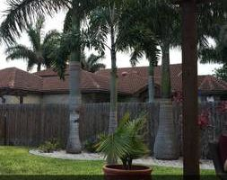 Lawn Care/Mantenimiento de jardin RGV Lawn Sharks