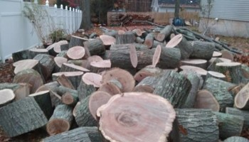 MG TREE SERICES, LLC. AFFORDABLE PRICES!