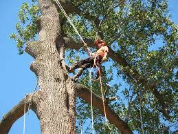Affordable Quality Tree Work