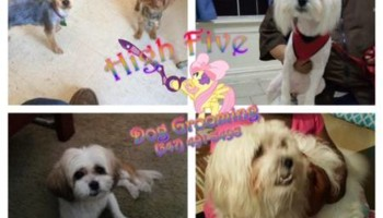 HIGH FIVE DOG GROOMING! Affordable!