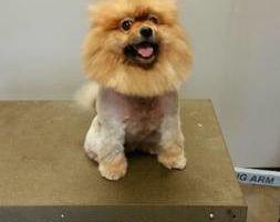 Gail's DOG Grooming