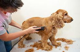 Ginger's Mobile Dog & Cat Grooming, LLC