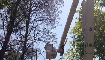 American Made Tree Service