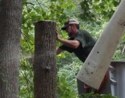 On The Grind Stump Removal and Tree Service