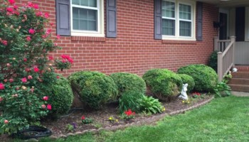 DENBIGH LAWN CARE, LLC