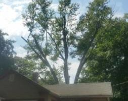 TREE CUT'N / TREE CLIMBING