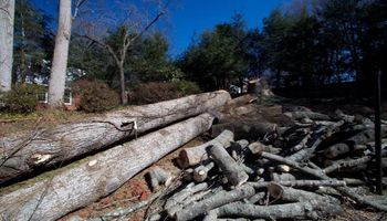Rocky Top Tree Service/ Storm cleanup