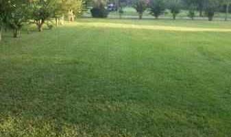 $30 Lawn Care