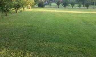 Lawn Care $30